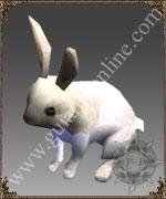 [Imagem: rabbit.jpg]